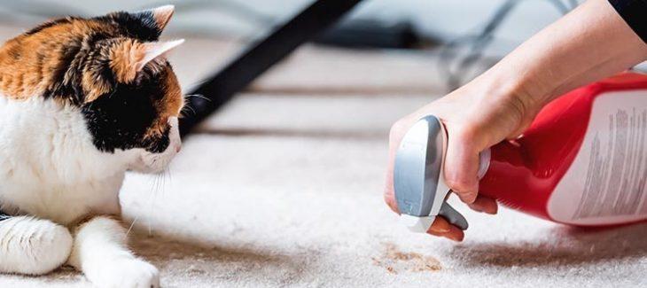 Best Carpet Cleaner For Cat Vomit